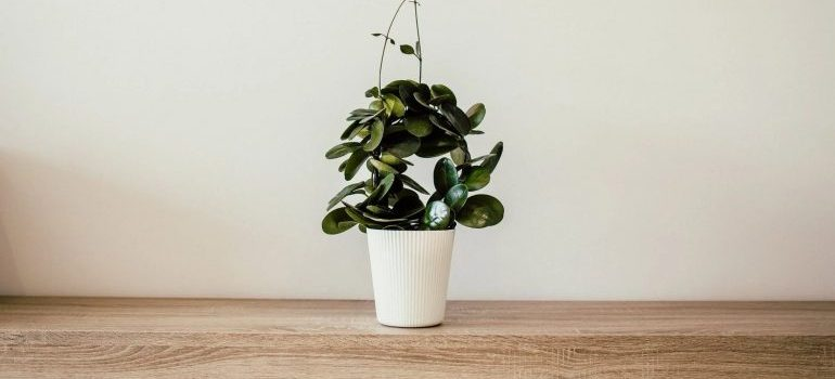 a plant of someone who knows how to prepare your plants for a long-distance move