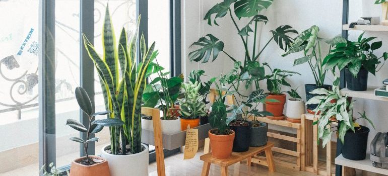 plants of someone who doesn't know how to prepare your plants for a long-distance move
